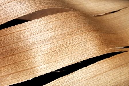palm frond: Un primo piano astratto di una sezione di un palmo di legno fronda strappata con una trama lineare