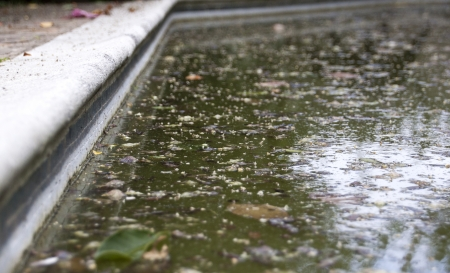 unkept: A closeup of the surface of a diregarded swimming pool contaminated with green algae and old leaves Stock Photo