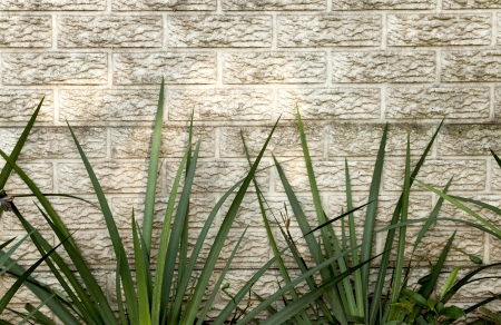 precast: green iris leaves against precast concrete wall with pattern and texture