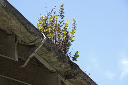 clogged: fern growing in clogged mouldy unkept asbestos gutter Stock Photo