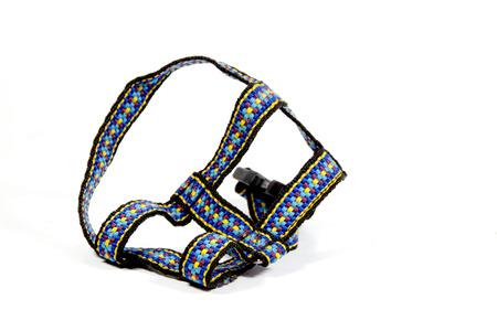 restraining: studio shot of colorful dog restraining harness
