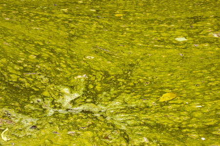 unsanitary: unsanitary surface of green stagnant algae infested water Stock Photo