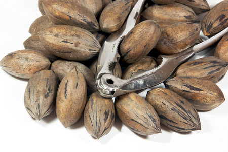 whole pecans: silver nutcracker with pile of pecan nuts Stock Photo
