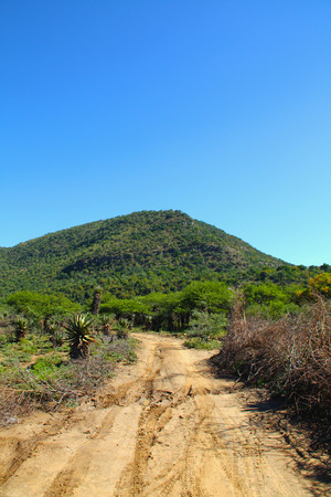 vegatation: Narrow rural african muddy dirt road through green vegatation landscape