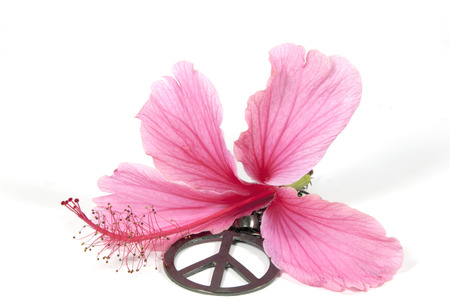 Pink Hibiscus Flower With Silver 1960s Peace Pendant As Symbol