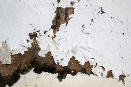 fungus and flaking paid due to rising damp Banco de Imagens