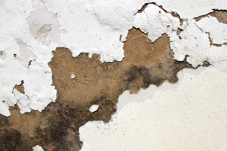 plaster mould: mould on plaster and peeling paint indicating rising damp