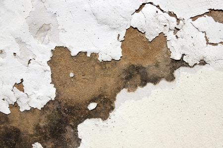damp: muffa sul gesso e vernice scrostata indicando umidit� di risalita