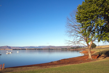 howick: trees on the shore of midmar dam, howick, south africa