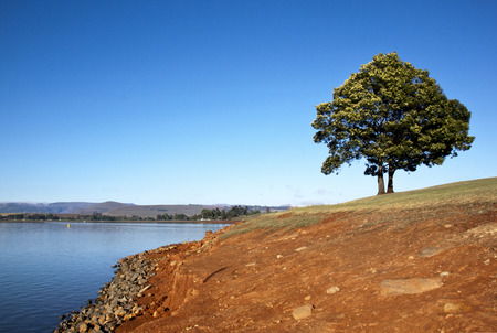 howick: lonely tree on the shore of midmar dam Stock Photo