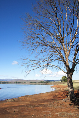 howick: leafless tree on the banks of midmar dam