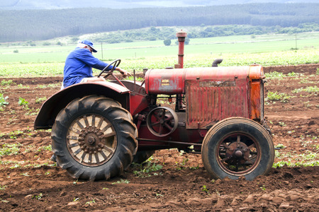 kwazulu natal: Richmond, KwaZulu Natal, South Africa - December 7, 2014: Unknown man demonstrating Vintage tractor at Natal Vintage Tractor and Machinary Club at Baynesfield Estate in Richmond, KwaZulu-Natal, South Africa Editorial