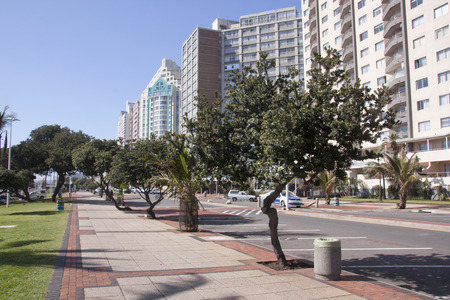 beachfront: DURBAN, SOUTH AFRICA - DECEMBER 4, 2014: Tree lined walkway on Golden Mile beachfront in Durban, South Africa