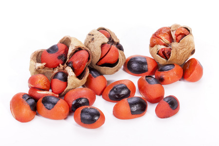 black seed: bright red and black seed and burst pods of natal mahogany tree on white