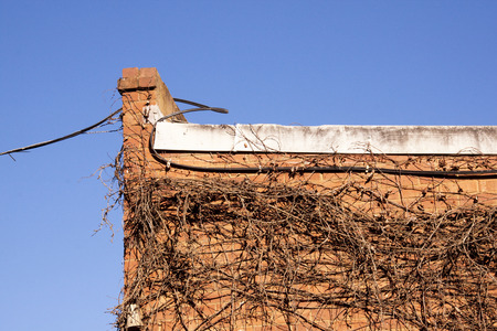 climbing cable: cable and dry creeper on side of red brick building Stock Photo