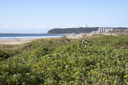 rehabilitated: Rehabilitated dune in front of many unknown people and Bluff and harbor entrance in Durban, South Africa