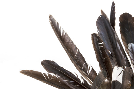 dishevelled: dishevelled birds feathers in various shades of grey Stock Photo