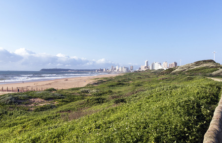 rehabilitated: Rehabilitated dunes on beachfront against city skyline and Bluff in Durban South Africa
