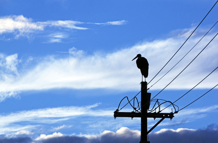 wooly: Silhouette of wooly neck stork on electricity pole with wintery cloud back ground