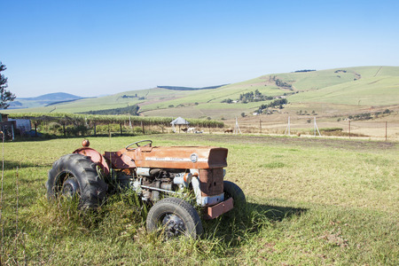sugar cane farm: DURBAN, SOUTH AFRICA - MAY 31, 2016 :Vintage abandoned red Massey Ferguson 135 tractor in sugar cane farm landscape overgrown with grass in Richmond, South Africa Editorial