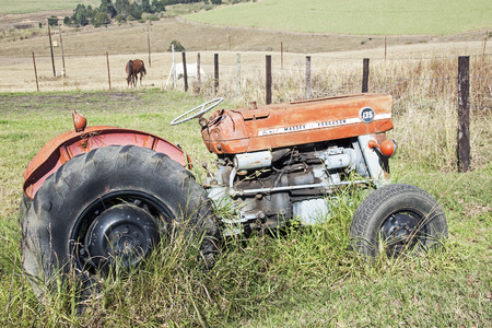 DURBAN, SOUTH AFRICA - MAY 31, 2016 :Vintage abandoned red Massey Ferguson 135 tractor overgrown with grass and two horses in sugar cane farm landscape in Richmond, South Africa