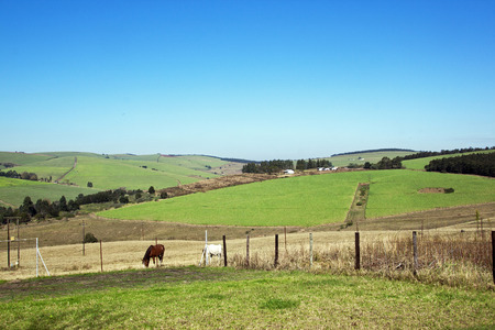 sugar cane farm: Landscape farm view of horses and sugar cane plantation and blue sky in South Africa