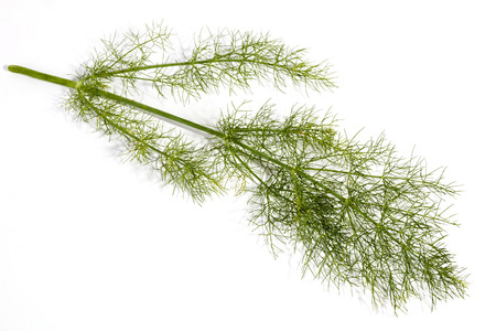 foeniculum: Studio shot of green stem and leaves of fennel plant on white background Stock Photo