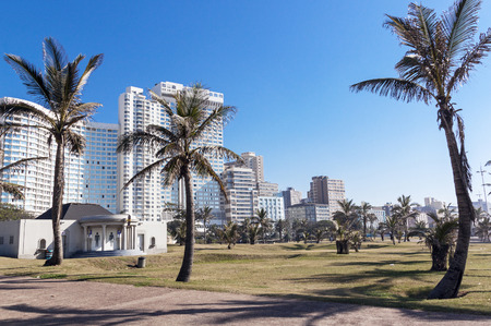 beach front: Palm trees and dry winter grass lawn against Golden Mile beach front skyline in Durban South Africa