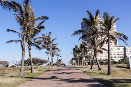 beach front: Palm trees and paved walkway lead toward residential complex on beach front in Durban South Africa Stock Photo