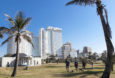 grass area: DURBAN, SOUTH AFRICA - JUNE 26, 2016: Early morning four unknown adults walk dogs on grass area between palm trees against Golden Mile city skyline in Durban, South Africa Editorial