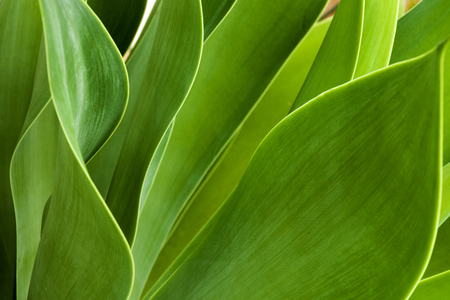 Extreme close up of green patterns and textures of natural leaves of succulent plant Banco de Imagens