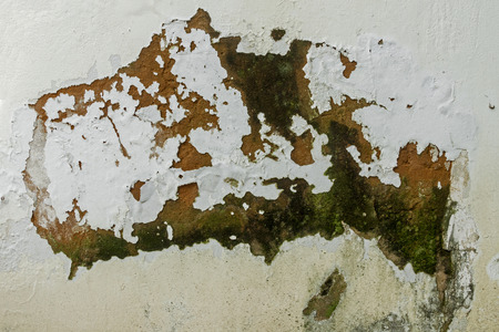damp: Green mold fungus and peeling and flaking paint due to rising damp and lack of maintenance on exterior wall