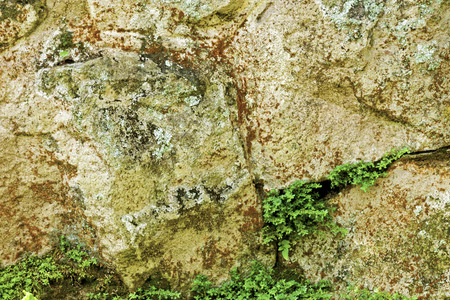 natural vegetation: Close up of natural vegetation mold patterns and textures on weathered stone structure background