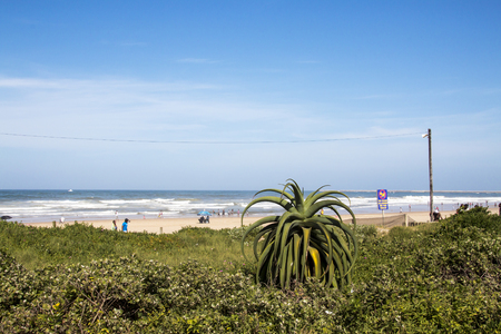 DURBAN, SOUTH AFRICA - DECEMBER 19, 2016: Green dune vegetation sand walkway and many unknown people on beach against blue ocean skyline in Durban, South Africa