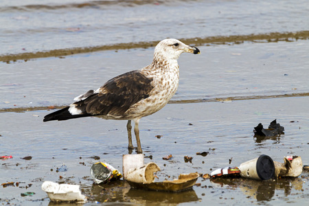 Petrel bird wading in polluted shallow water of harbor, Durban South Africa Banco de Imagens