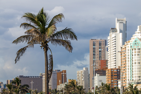 Close up of palm trees against overcast city skyline in Durban, South Africa Stock Photo