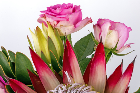 Close up of arrangement of protea and pink rose flowers and  green leaves