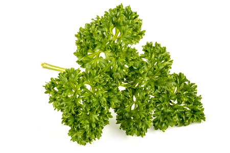 Close up isolated section of sprig of green foilage of parsley herb plant on white background