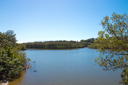 Morning coastal landscape view of wetland vegetation and lagoon against  blue cloudy sky at Umlalazi Nature Reserve at Mtunzini near Durban South Africa