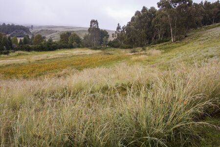 Meadow of indigenous grasses and flowesr with trees in background