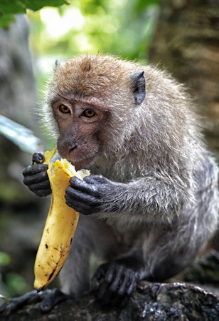 monkey and banana photo