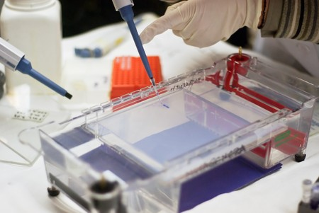 loading a sample into a gel for electrophoresis Stock Photo - 7823781