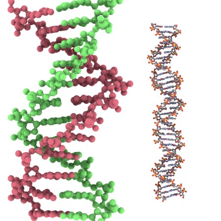 nucleic: Computer rendering of DNA molecule on a white background Stock Photo