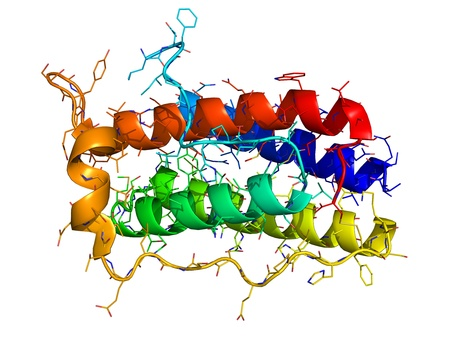 protein structure: Leptin, the human obesity protein that regulates an appetite. 3D molecular structure