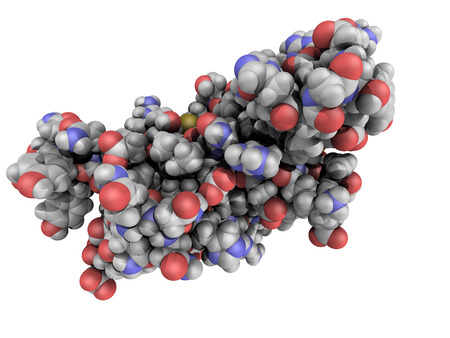 transmissible: Chemical structure of a human prion protein molecule (hPrP). hPrP is associated with transmissible spongiform encephalopathies, including Creutzfeldt-Jacob disease.