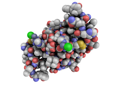 Chemical structure of a human insulin molecule. Insulin is a peptide hormone used to treat type 1 diabetes photo