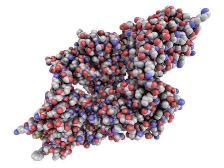 Monoclonal antibody (Immunoglobulin) molecule, chemical structure. Most current biotech drugs are monoclonal antibodies.