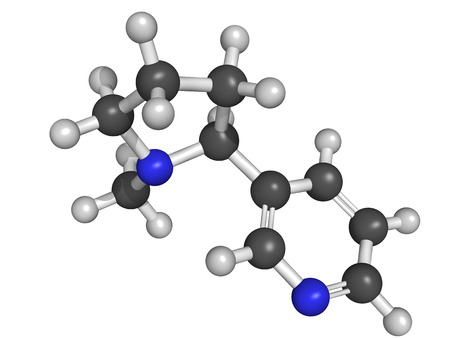 Nicotine molecule, molecular model  Nicotine is the main addictive component of tobacco  photo
