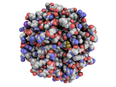 insoluble: Structure of thrombin blood-clotting enzyme: Human alpha-thrombin molecule is a key protein in the blood coagulation cascade. Converts soluble fibrinogen into insoluble fibrin Stock Photo