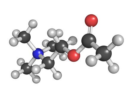 autonomic: L'acetilcolina (ACh) neurotrasmettitore, modello molecolare. Gli atomi sono rappresentati come sfere con codifica a colori convenzionali Archivio Fotografico